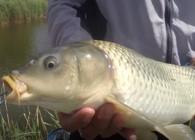 《钓鱼百科》 第125集 什么是肥水塘?