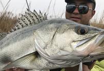 《浔鱼问道》如东深水围河探钓海鲈,阿珂如何快速找到水层。