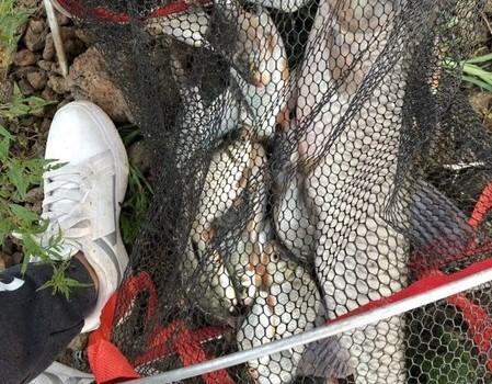 兩戰洪潮水庫有收獲,釣獲八斤大草魚
