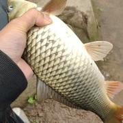 老钓友分享如何避开小杂鱼,总有一招适合你