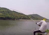 《麦子钓鱼》一个大黑漂 提竿中青鱼 隔着屏幕都能感觉到青鱼的力量