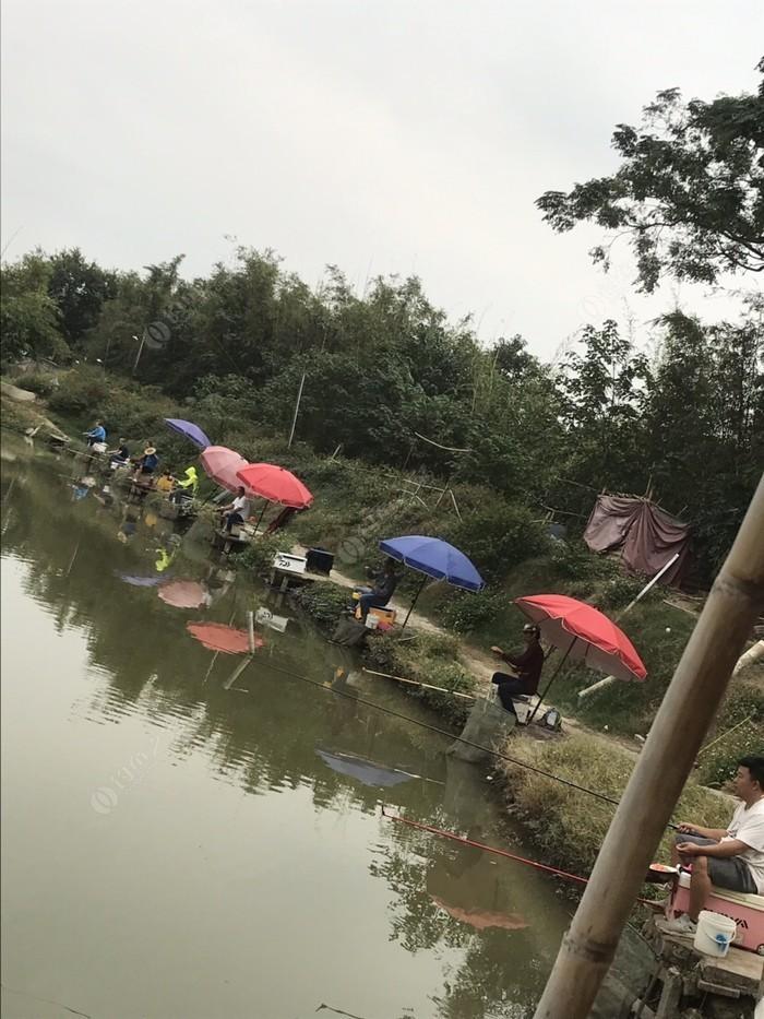 桂花洲钓鱼场