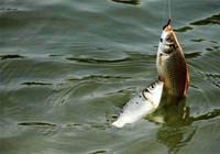 一個魚獲滿滿的春釣,要從這三點開始!