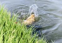 春釣黃金季,必須注意的幾點問題!