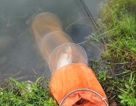 手竿钓鲢鳙三要素:   气温  饵料状态  鱼密度