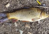 秋天做钓鲤鱼个人经验心得分享