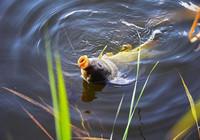 春季釣鯉,這些技巧一定要知道!