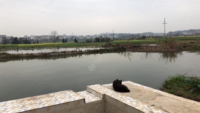 鹿马桥镇渔场
