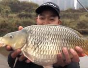 《谷麥釣手石頭》小伙運氣爆棚,幾十塊一斤的魚連竿三條!