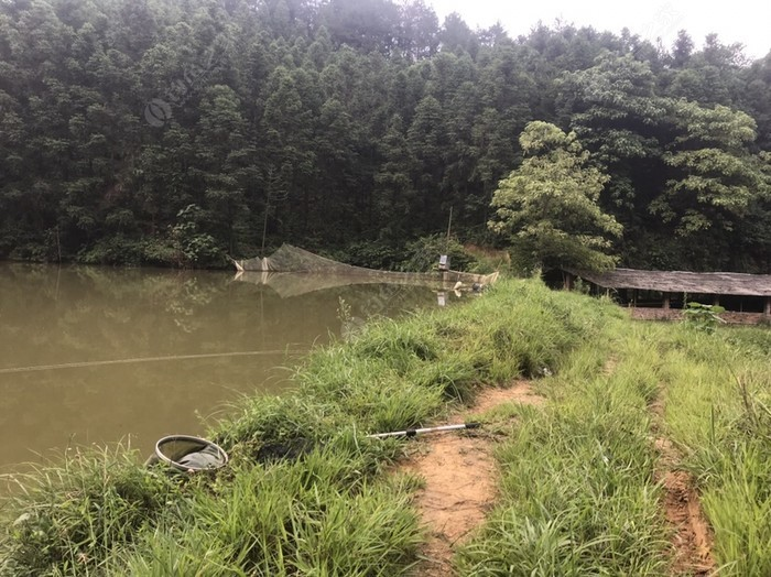西塘水库路上鱼塘