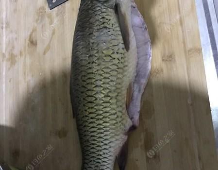 再釣大草,切線依然堅持!附帶水煮魚做法!