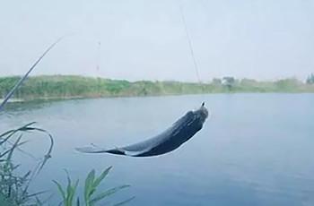 春天想要渔获丰,这些技巧不能少!