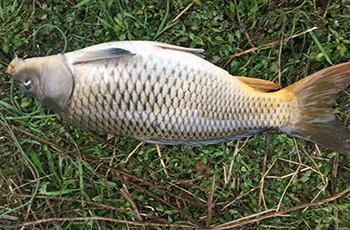 秋季鱼塘钓鲤鱼视频_钓鱼人必看 - 钓鱼爱好者的门户网站