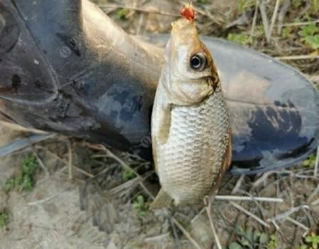 「踏青节」歪打正着,发现宝地,除了鱼获,还有副产品!