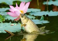 春夏之際鯉口輕,找準原因并不難!