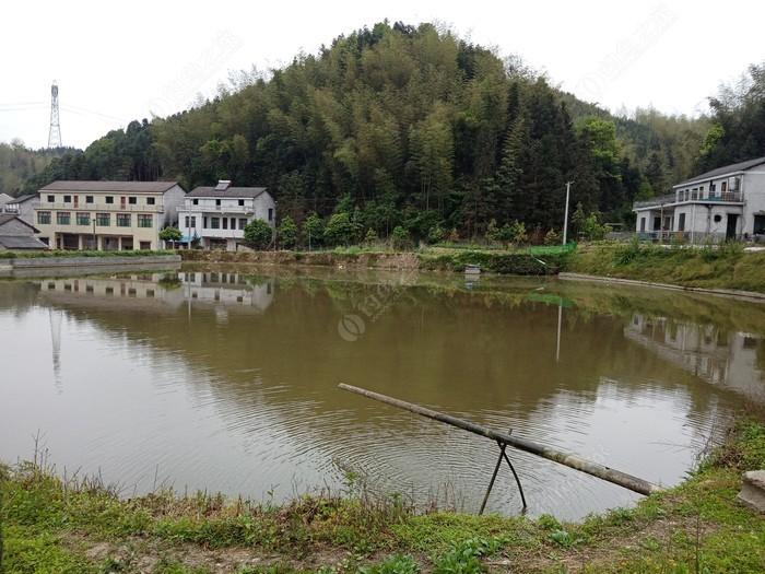 山泉水钓鱼场