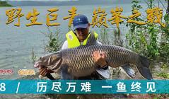 《白條游釣》70斤野生巨青終于被釣獲,大的簡直就是頭豬!
