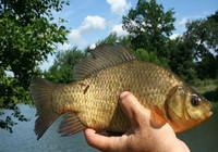 只需两点技巧,高温野钓也有好鱼获!