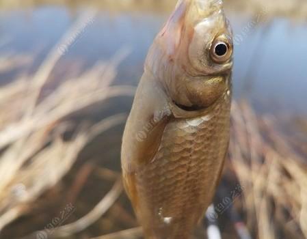 五一小長假,踏青挖野菜釣魚,美哉!