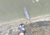 釣友分享自制魚餌釣巨青
