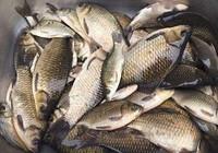 夏季釣鯽的幾個要點!