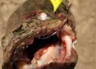 雷蛙打黑想要提高中魚率?找準標點很關鍵
