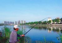這些逗釣手法你會幾種?傳統釣必看!