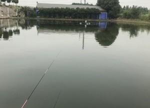 嗨鱼庄钓场天气预报