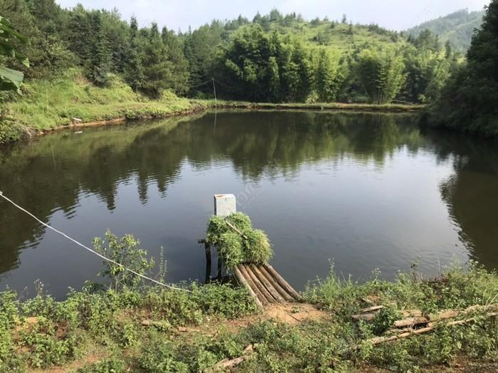 黃龍農莊釣魚場