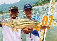 《白条游钓》 白鲦老曹游钓花亭湖,鱼情超乎预期,两人连杆黄尾鲤鱼