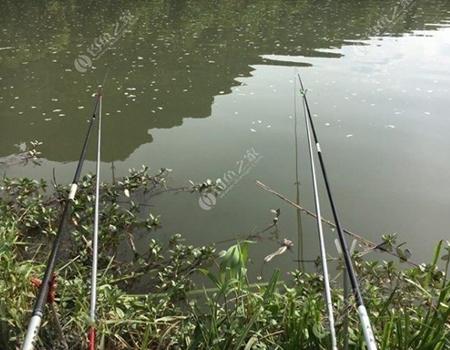 夏季夜钓草鱼的技巧