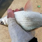 【钓技-调漂技巧】钓半水调漂技巧,如何找鱼层