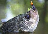外出钓鱼影响渔获的十个因素