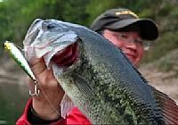 《路亚钓鱼视频》教程浮水铅笔钓大口鲈鱼