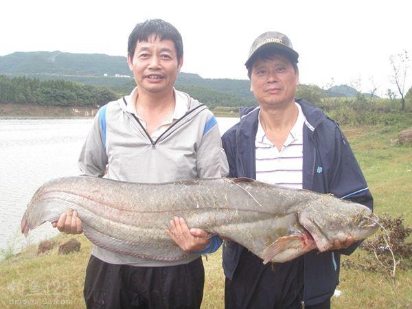 升钟湖钓获42斤大鲶鱼