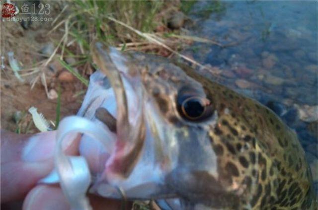 海竿串鉤路亞鱖魚翹嘴魚技巧附假蝦制作方法
