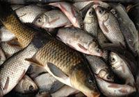 冬季出钓喜得满满一盆鱼儿