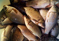 野外垂釣辛苦一天魚貨兩斤漁樂三份