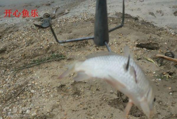 洞庭湖野釣場路亞釣獲黑魚