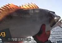 《渔乐生活》第70集 Billy的环球游钓之旅钓鱼视频