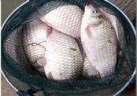 爱钓鱼就是这么任性爽钓到爆桶