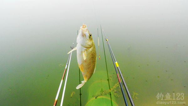 燕山水库钓鲫鱼