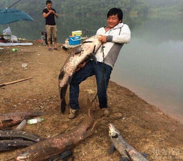 清江河钓大青鱼