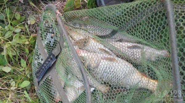 水库钓鱼收获