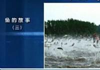 《鱼乐无限》2014 第17期 鱼的故事三