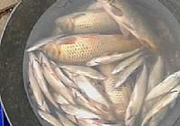 夏季夜钓文昌湖钓鲤鱼喜获20多斤大鲤鱼