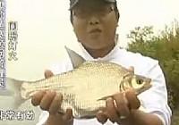 《老鬼钓鱼视频》水库狂钓大鳊鱼