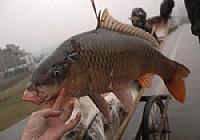 五一夜钓东平湖手竿钓获20斤大鲤鱼