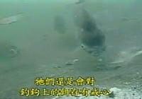 《水库钓鱼视频》水库钓鱼水底探秘