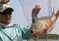 《邓刚钓鱼视频》 第04集 春天在水库钓鱼技巧